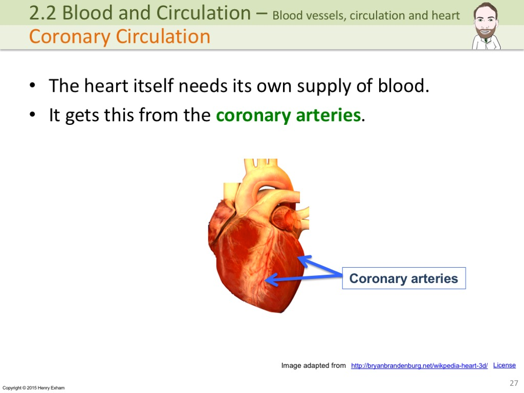 the heart and blood circulation essay