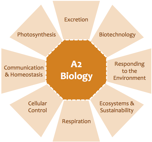 A Biology Term Paper: Coming Up With Excellent Topics