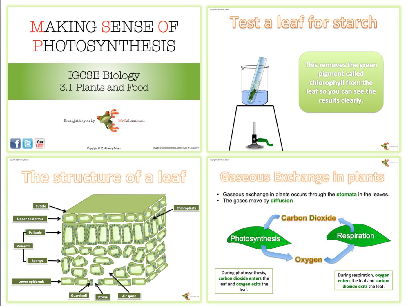 aqa gcse biology coursework photosynthesis
