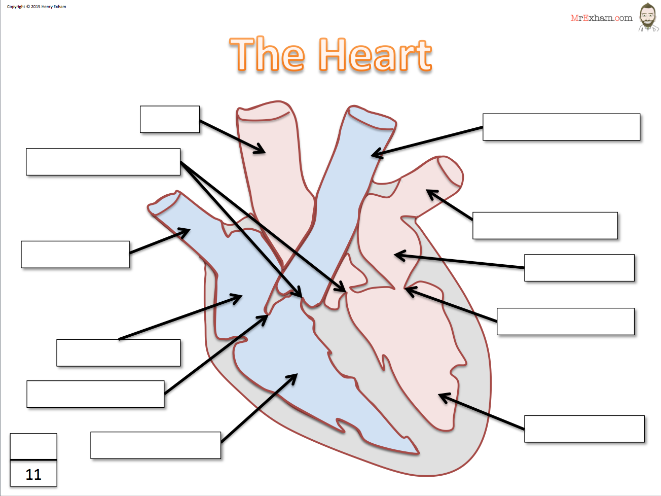 Heart – Heart Diagram Worksheet